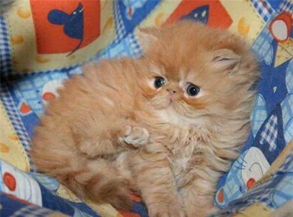 Как растет котенок (18 фото)