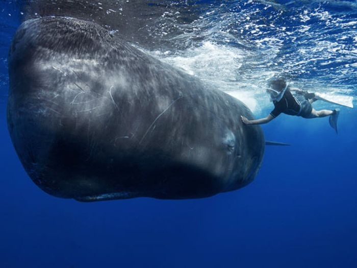 Плавание среди китов (13 фото)