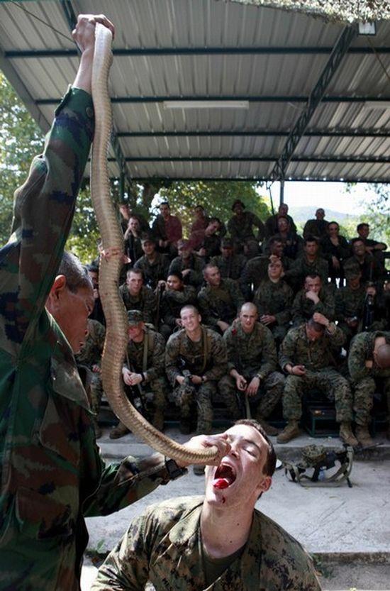 Учения Cobra Gold 2010 в Таиланде (24 фото)
