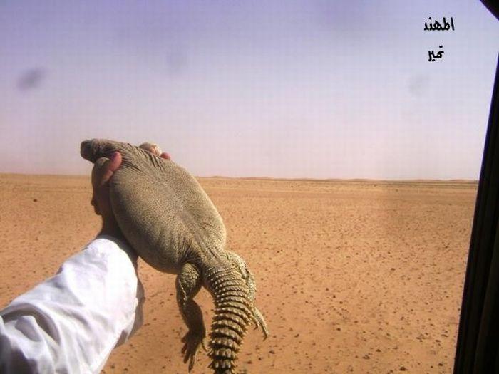 Охота на ящериц (29 фото)