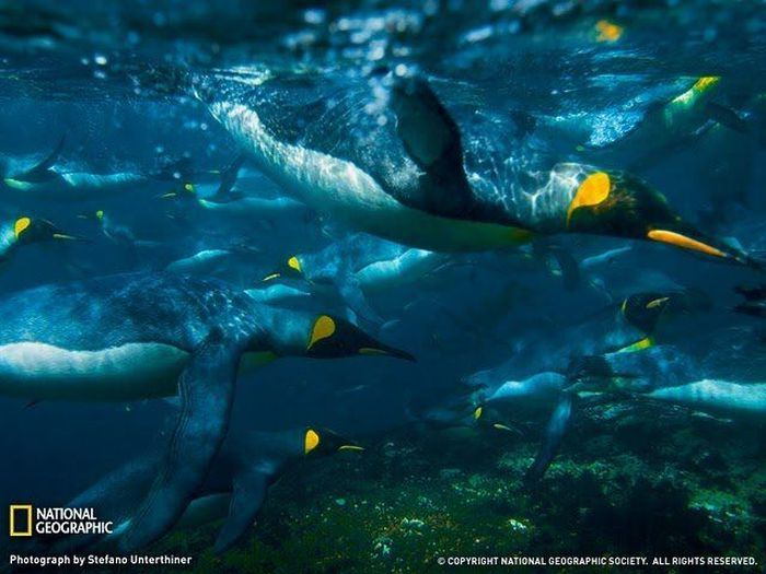 ������ ���� �� National Geographic (40 ����)