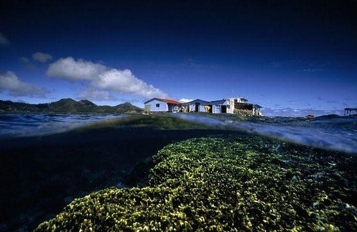 Лучшие фото от National Geographic (40 фото)
