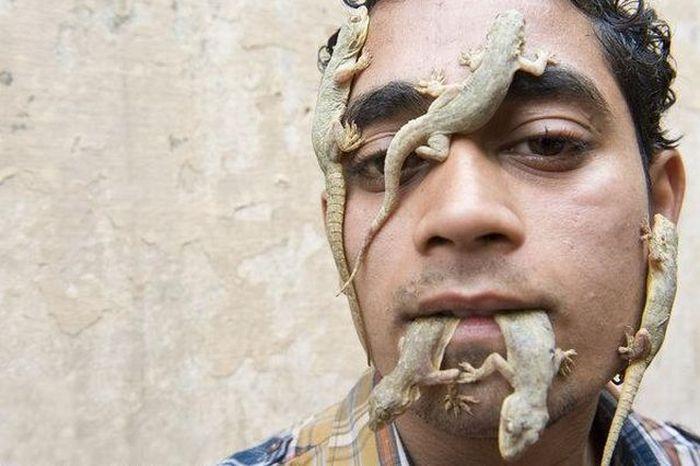 Лучший друг ящериц (5 фото)