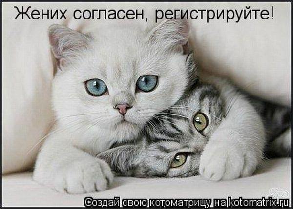 http://de.trinixy.ru/pics4/20100226/kotomatrix_36.jpg