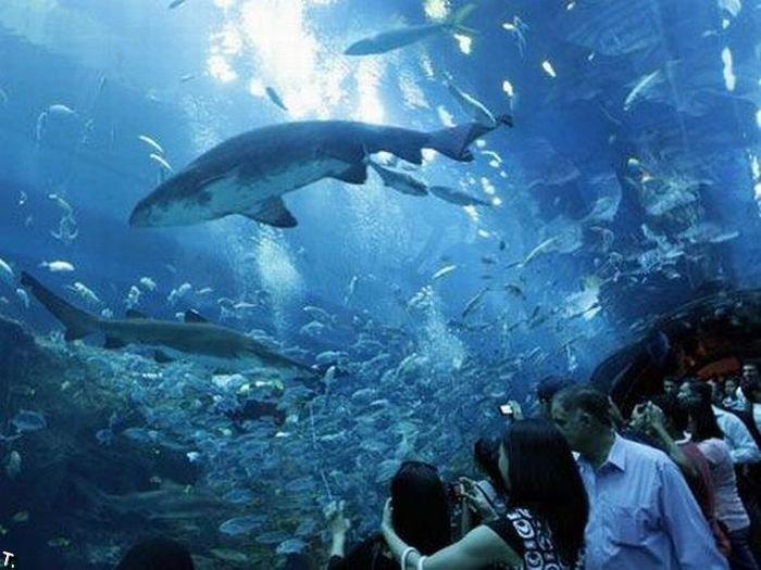 Дубайский аквариум дал течь (14 фото + видео)