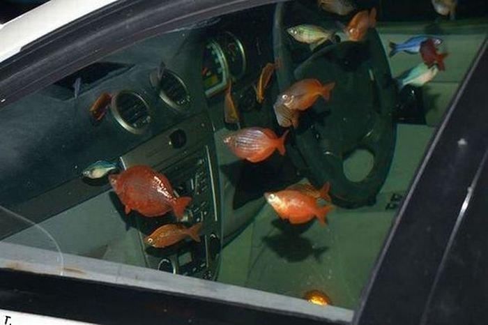 Аквариум в автомобиле (9 фото)