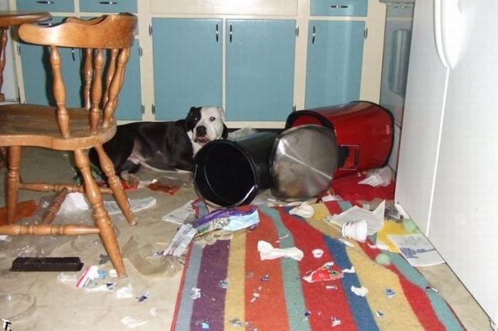 Животные одни дома (33 фото)