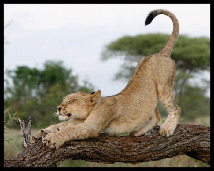 Классные фотографии с животными (72 фото)
