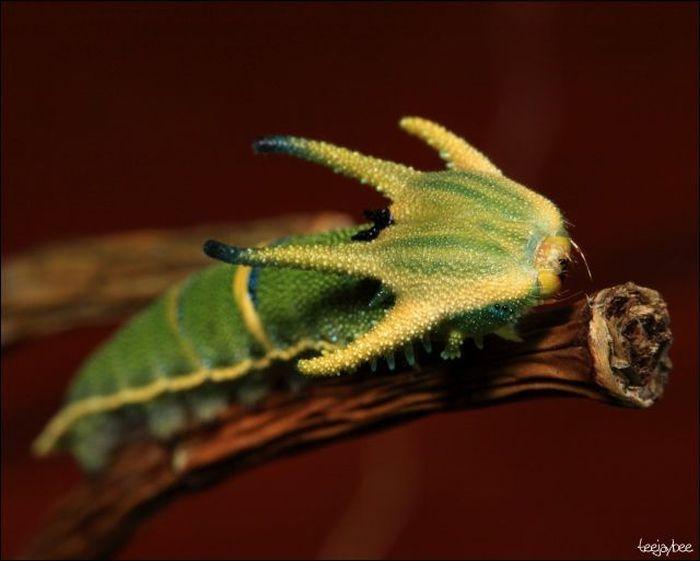 Необычные гусеницы (33 фото)