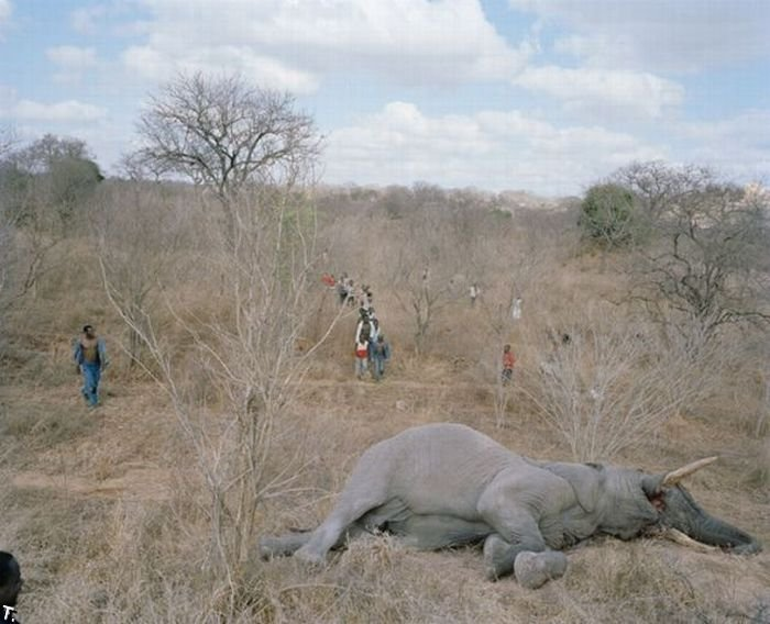 http://trinixy.ru/pics4/20100309/zimbabwe_elephant_02.jpg