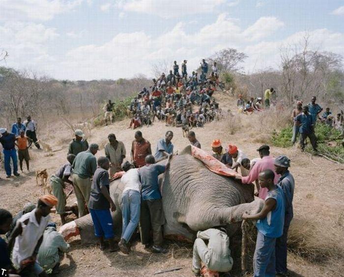 http://trinixy.ru/pics4/20100309/zimbabwe_elephant_03.jpg
