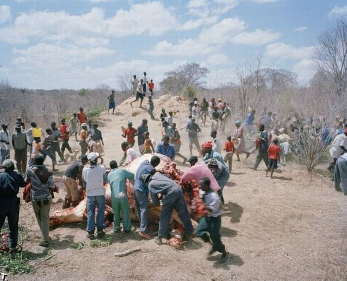 http://trinixy.ru/pics4/20100309/zimbabwe_elephant_04.jpg