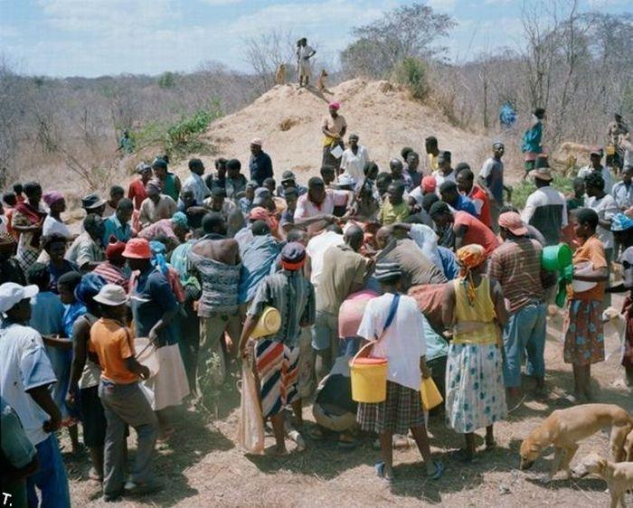 В Зимбабве нашли мертвого слона... (9 фото)