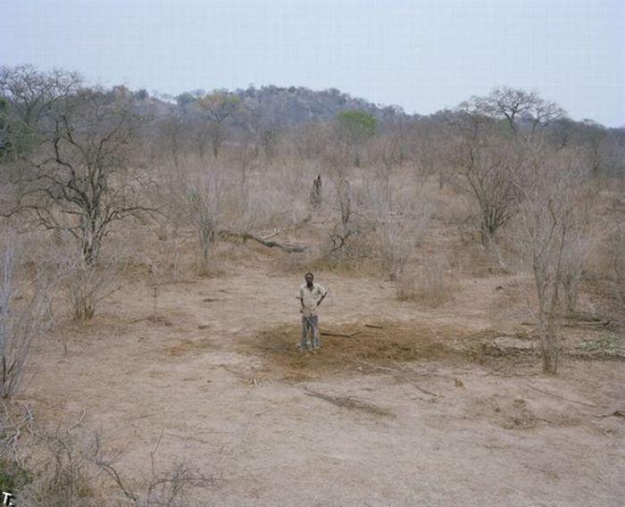 http://trinixy.ru/pics4/20100309/zimbabwe_elephant_09.jpg