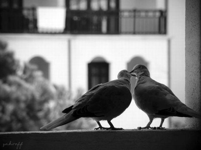 фото про любовь черно белые