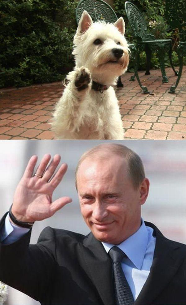 Привет, Путин (20 фото)
