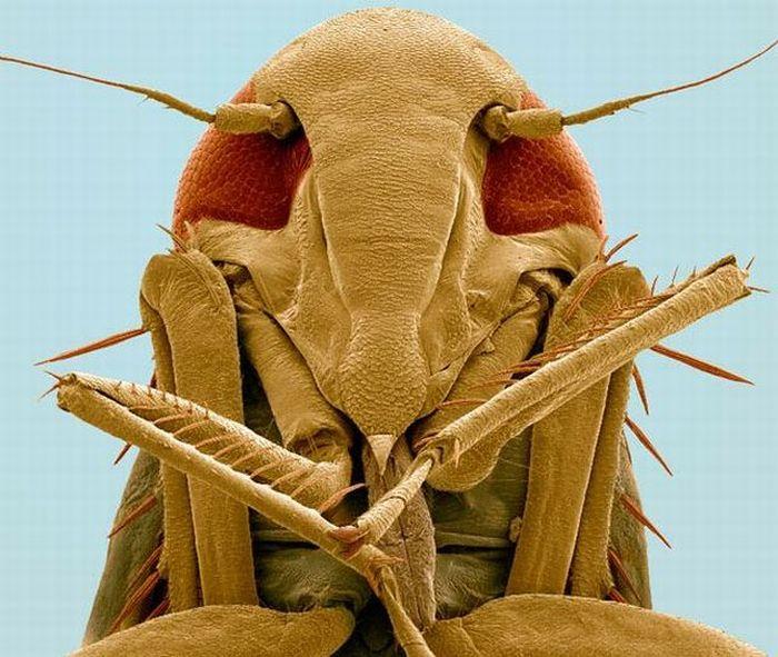 Что можно увидеть через электро-микроскоп (12 фото)