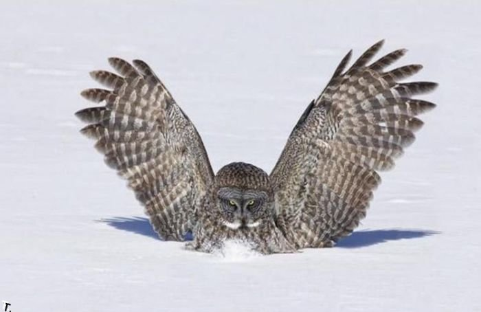 Смешная сова (3 фото)