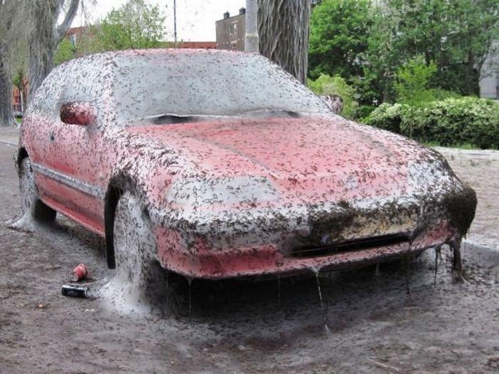 Худшее, что может случиться с вашей машиной (5 фото)