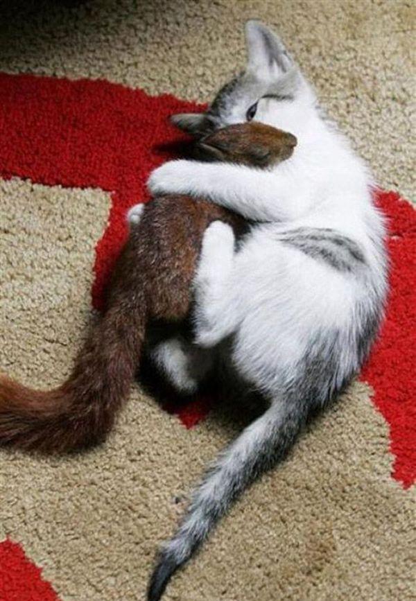http://ru.trinixy.ru/pics4/20100316/cat_adopted_small_squirell_04.jpg