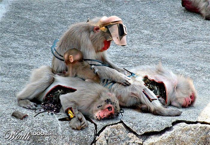 Животные-киборги (16 фото)