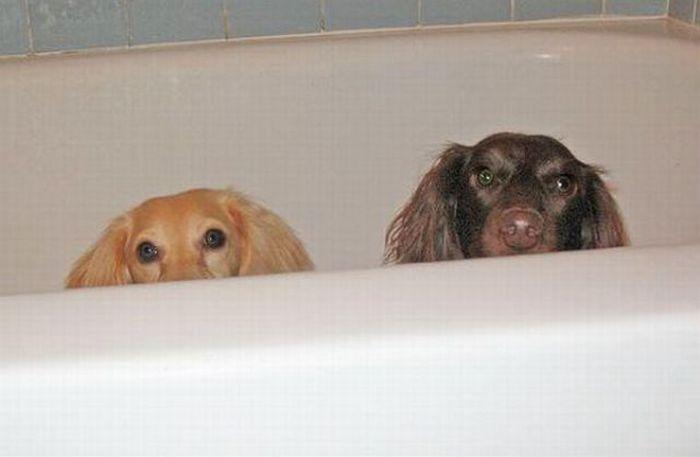 Собаки купаются (29 фото)