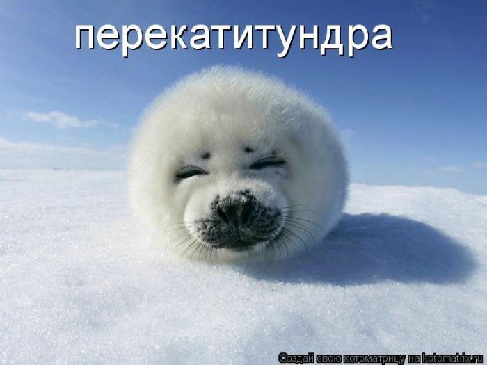 http://ru.trinixy.ru/pics4/20100319/kotomatrix_50.jpg