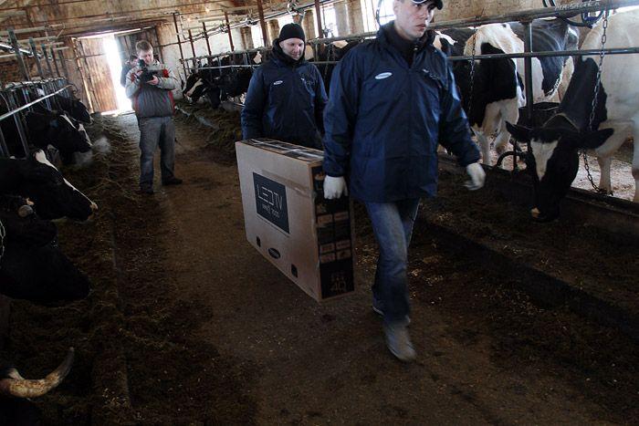 Телевизоры для коров (22 фото)