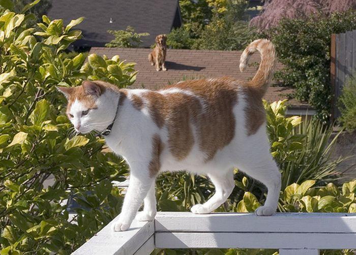 Собаки на крышах (55 фото)