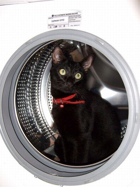 Как хранить котов (100 фото)
