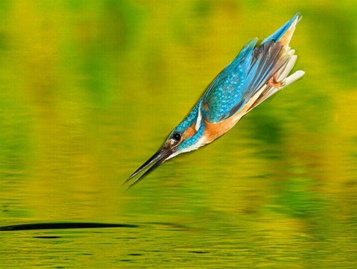 http://de.trinixy.ru/pics4/20100323/hunting_kingfisher_02.jpg