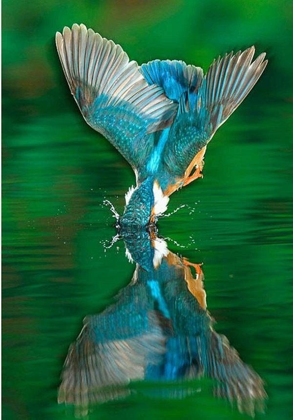 http://de.trinixy.ru/pics4/20100323/hunting_kingfisher_04.jpg