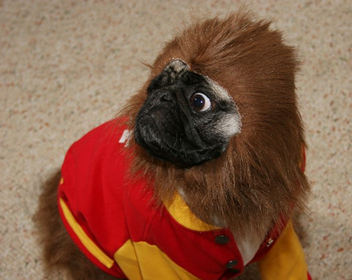 Симпатичная обезьянка (4 фото)