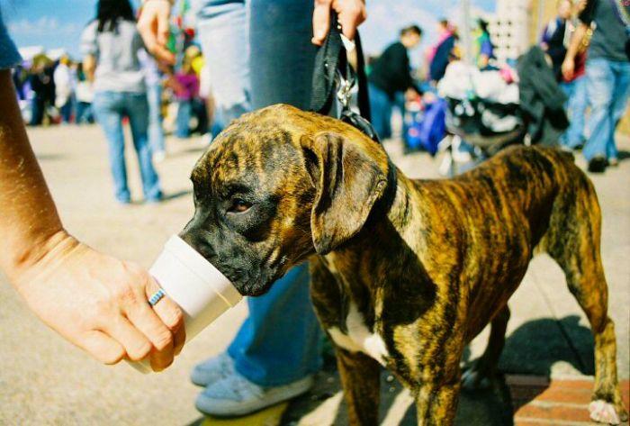 Собаки с пивом (20 фото)