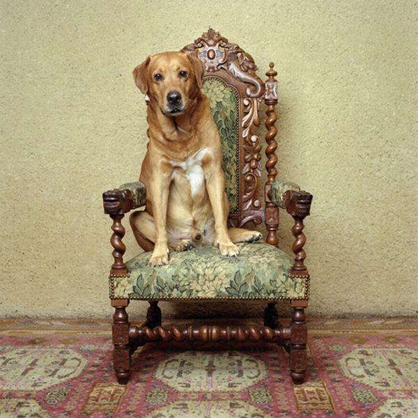Собачья жизнь (33 фото)