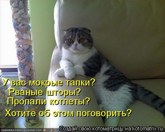 http://cdn.trinixy.ru/pics4/20100402/kotomatrix_10.jpg