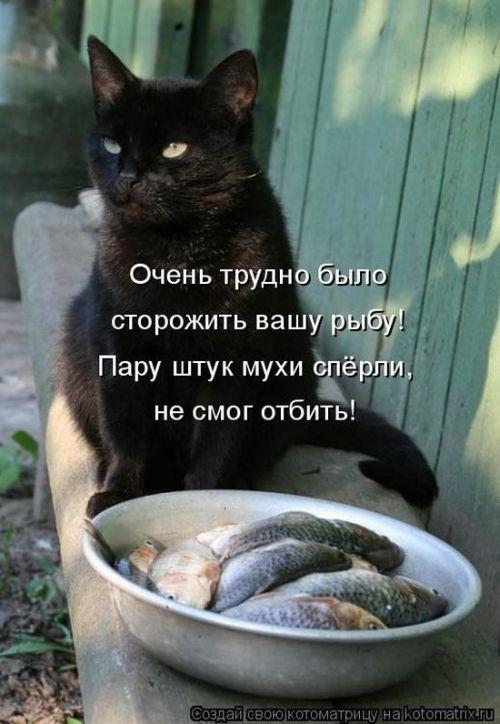 http://ru.trinixy.ru/pics4/20100402/kotomatrix_50.jpg