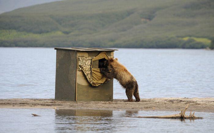Как сфотографировать животное в естественной среде (14 фото)