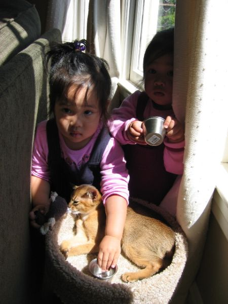 Дети и кошки (23 фото)