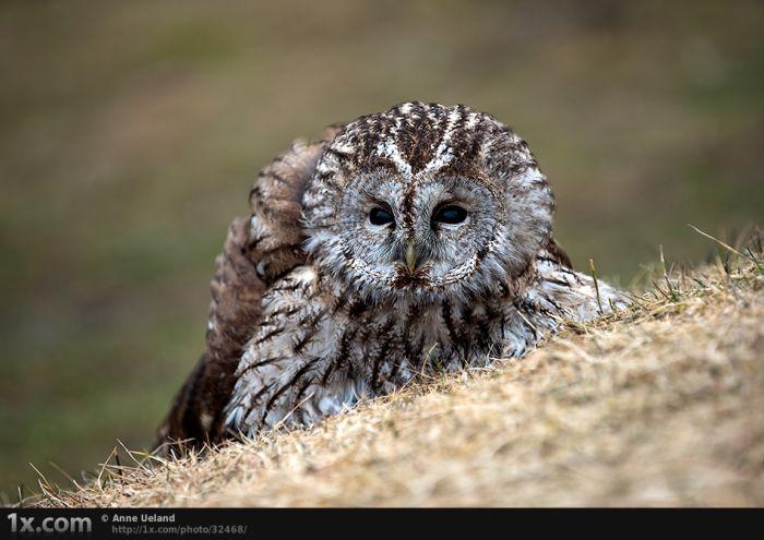 Красивые фотографии животного мира (30 фото)
