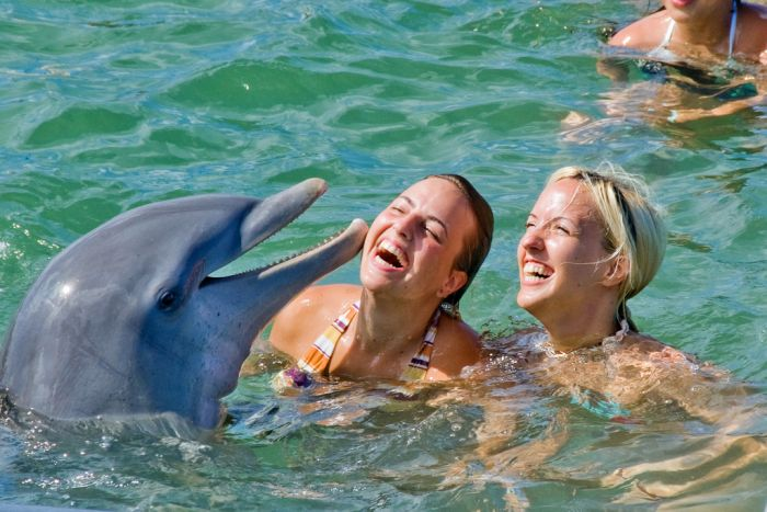 Дельфины (25 фото)