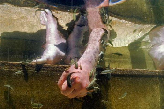 Рыбный СПА в Турции (12 фото)