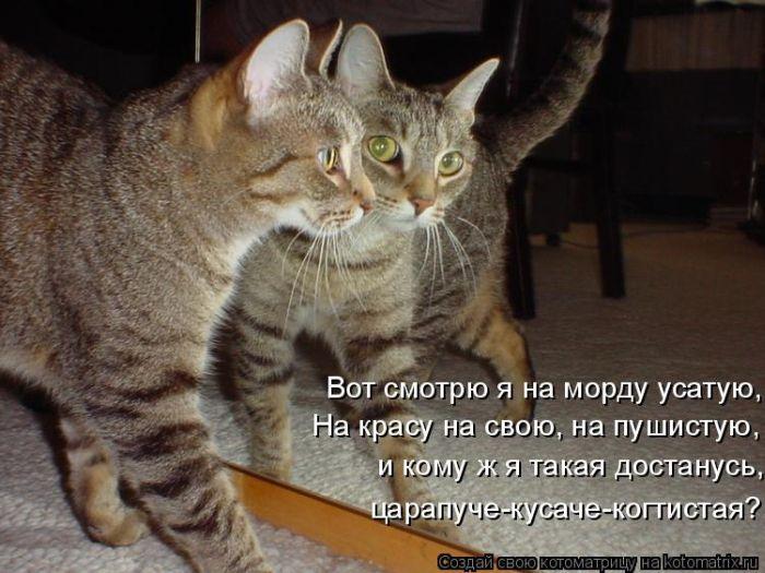 Животные картинки с надписями онлайн программа, картинки вкусно