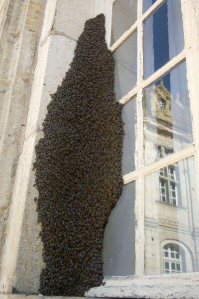 Нападение насекомых (27 фото)