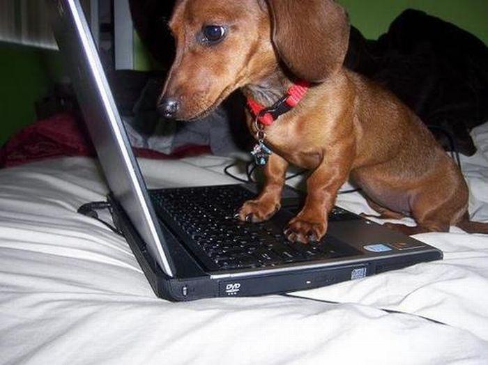 Животные на компьютерах (15 фото)