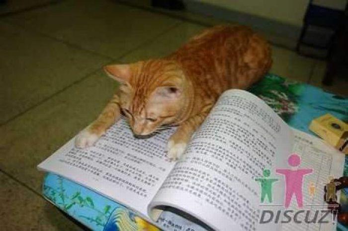Читающий кот (14 фото)