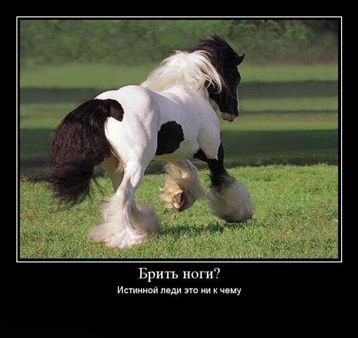 каждый демотиватор год лошади онлайн знакомства