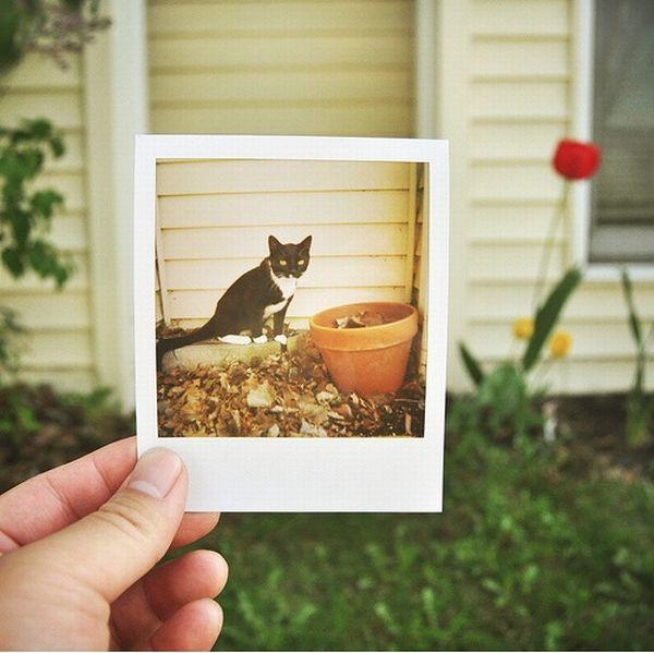 Моментальные фотографии в фотографиях (19 фото)