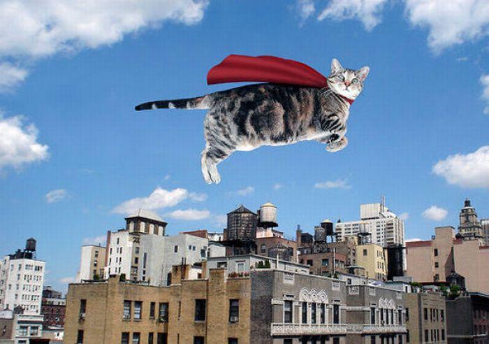 Летящий кот фото