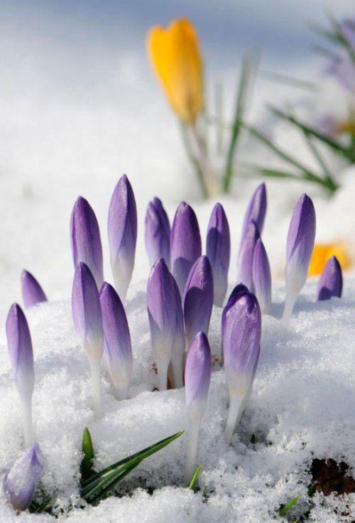 Лучшие новостные фотографии марта (92 фото)